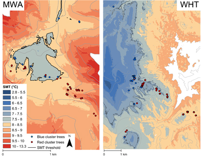 Cluster analysis and topoclimate modeling to examine bristlecone ...