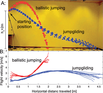 Performance analysis of jump-gliding locomotion for