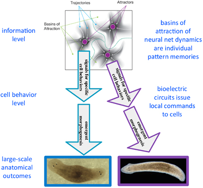 Cancer as a disorder of patterning information: computational and